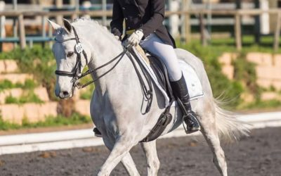 The beautiful art of dressage